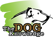The Dog Knowledge