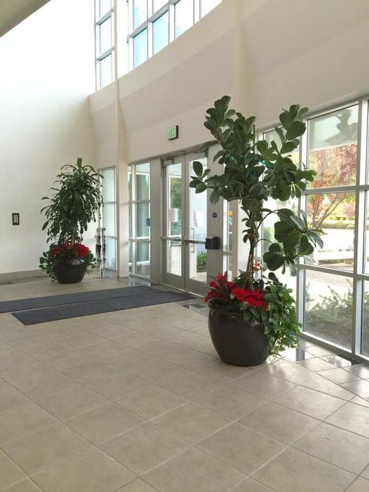 Creative Impressions Plants LLC