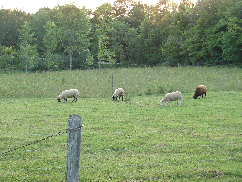 Timberwind Farm
