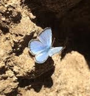 My Country Butterfly