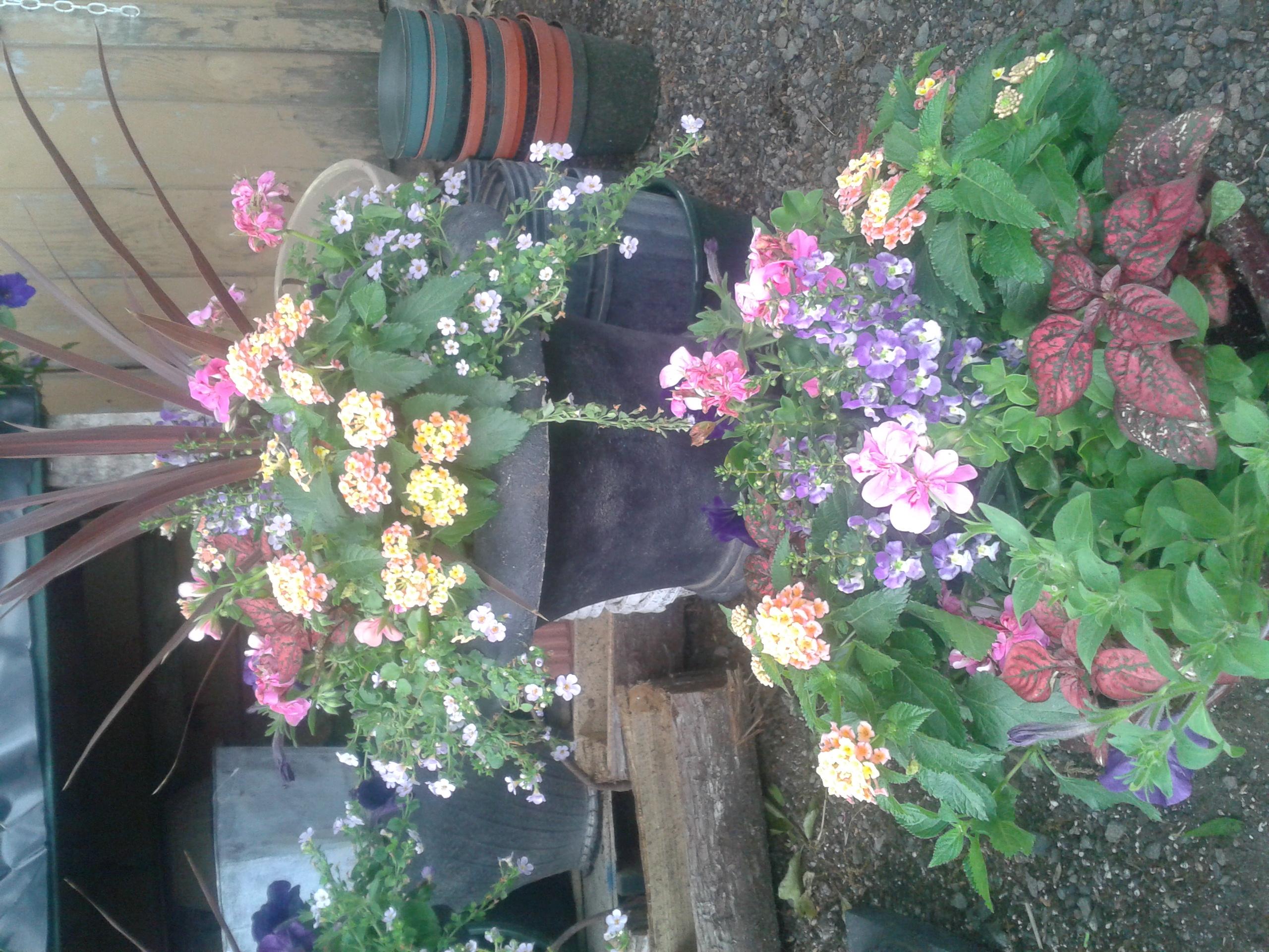 Seasonal Planters John Mazzone