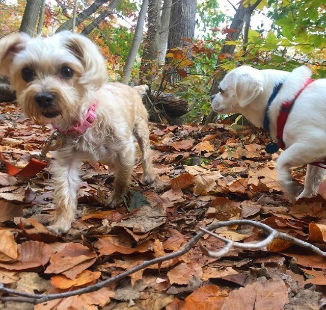 Image 2 | Pawsitive Action Pet Services