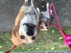 Image 5 | Pawsitive Action Pet Services