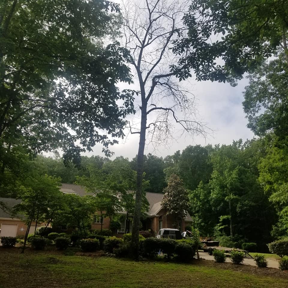 Image 5   Acacia Tree Service LLC