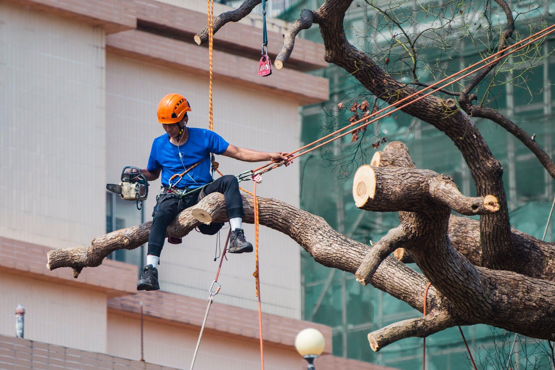 Image 2   Acacia Tree Service LLC
