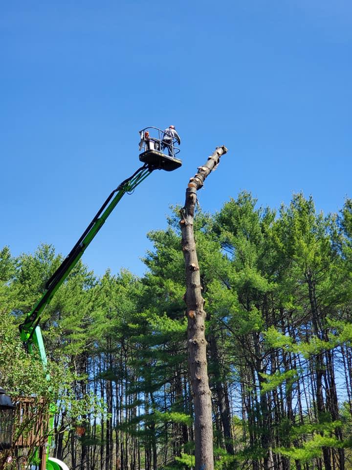 Image 4   Acacia Tree Service LLC