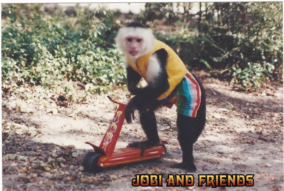 Jobi and Friends